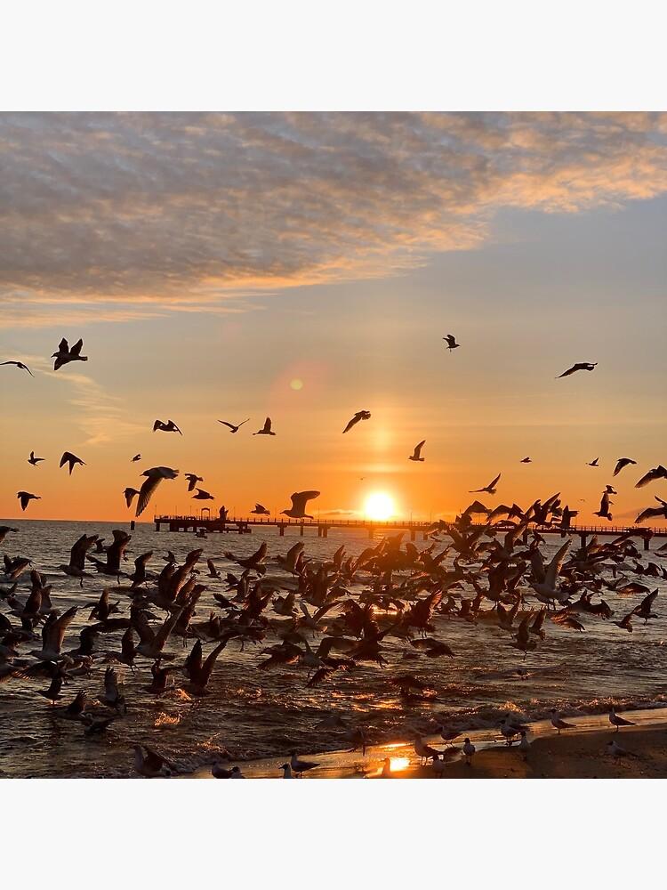 Vogel-Aufgang, Usedom von leanderwattig