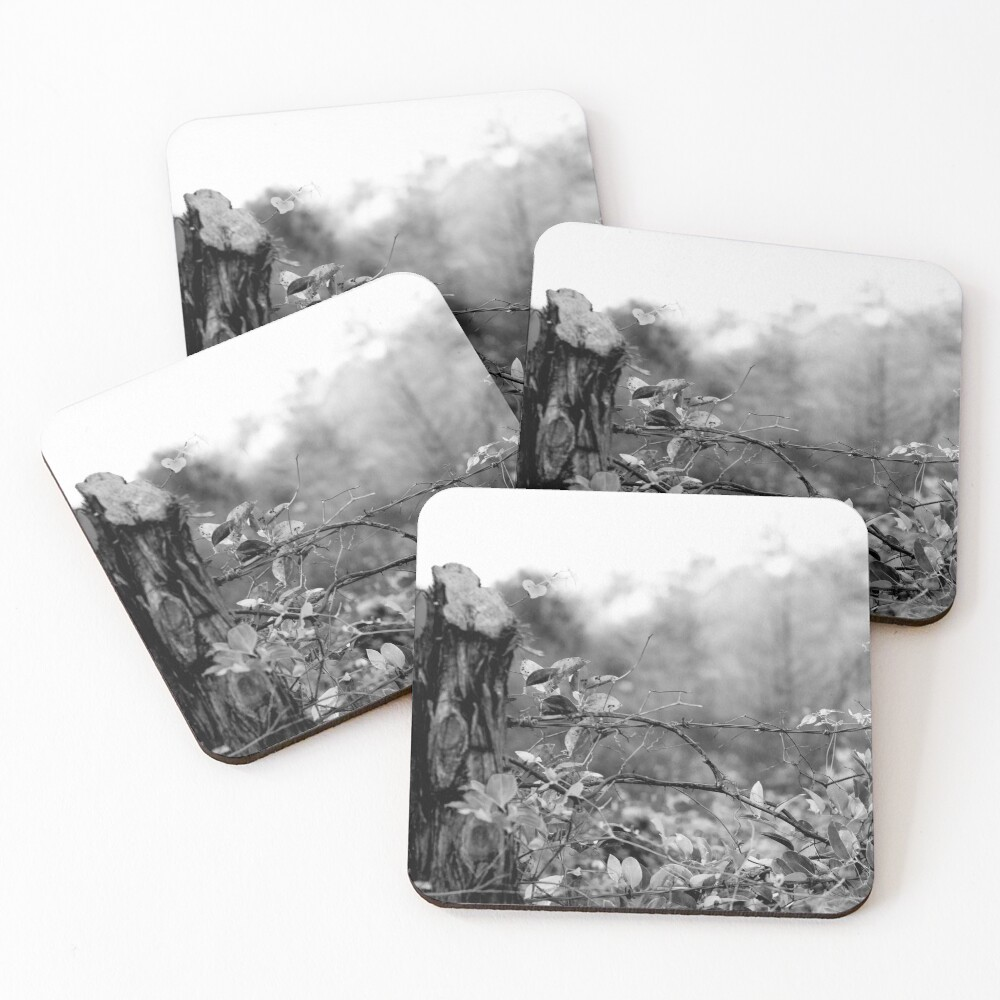 Country Road Coasters (Set of 4)