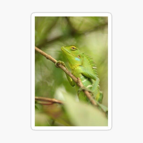 Green Chameleon on the Branch Sticker