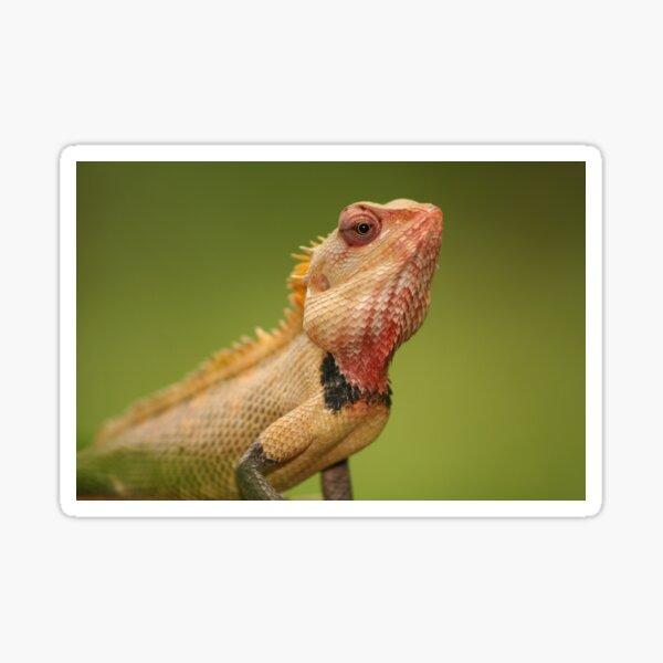 Red Chameleon 1 Sticker