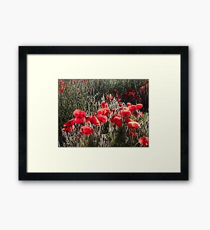 South Downs Poppies Framed Print