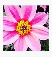 Yellow And Pink Flower Photographic Print