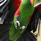 Le vol du perroquet by Yves Roumazeilles