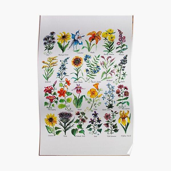 Wildflower Alphabet Poster