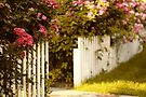 White Picket Fence by Jessica Jenney