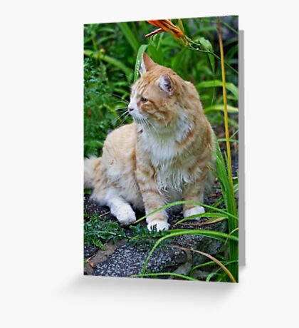 BobCat Among The Flowers Greeting Card