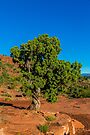 Cathedral Rock - Juniper Pine 2 by eegibson