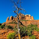 Cathedral Rock - Death Amongst Life by eegibson
