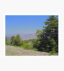 Barouk National Reserve, Lebanon Photographic Print