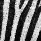 Zebra stripes by sermi