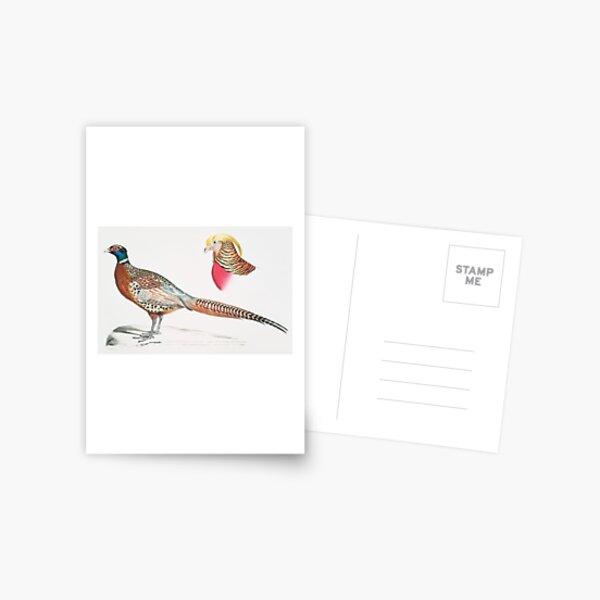Chinese Ring-necked Pheasant (Phasianus Torquatus/ Head of the Common Golden Pheasant (Chrysolophus Pictus) Postcard