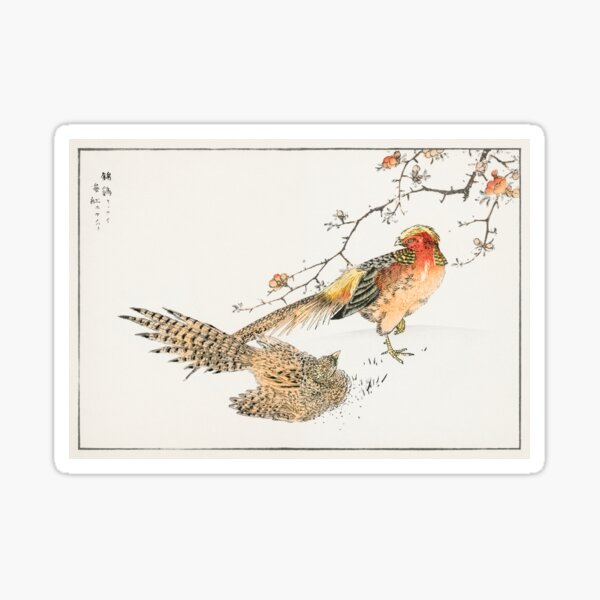 Golden Pheasant and Flower of Japanese Quince Illustration Sticker
