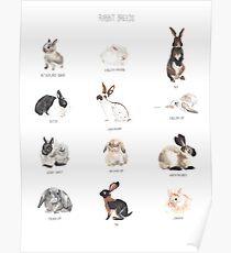 Rabbit Breeds Poster