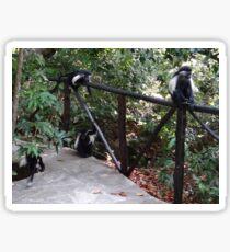 Colobus Monkeys at Sands Chale Island Sticker