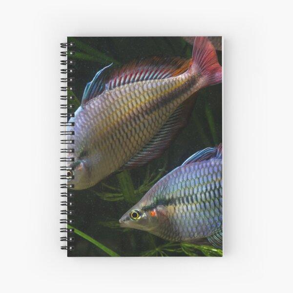 Melanotaenia trifasciata - Cato River Spiral Notebook