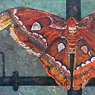 Atlas Moth by DouceArtifice