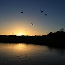 Flying ducks over Llangollen Canal by turniptowers