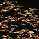 Autumn leaves on water by turniptowers