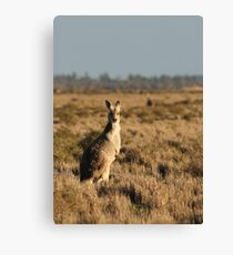 Red Roo Canvas Print