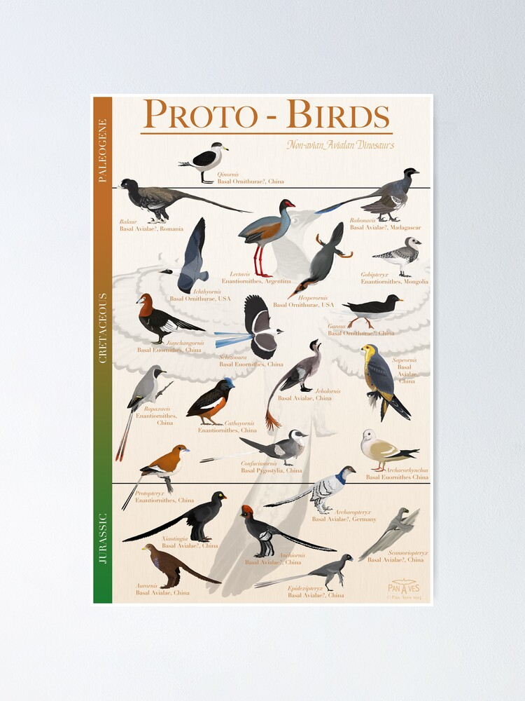 Alternate view of Proto-Birds Poster Poster