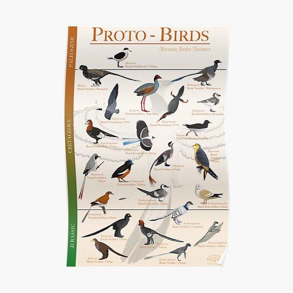 Póster de Proto-Aves Póster