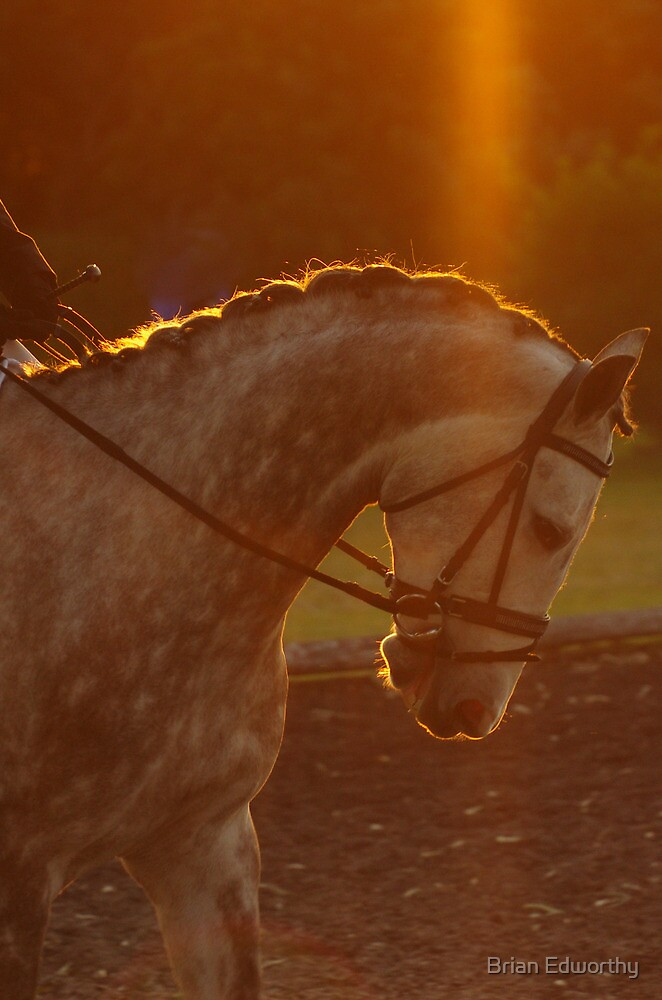 Bathed in Light by Brian Edworthy