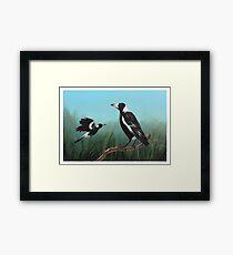 Australian Magpies Framed Print