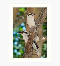 Kookaburra #1 Art Print
