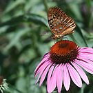 Coneflower and Friend by Monnie Ryan