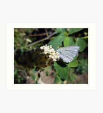 Greenish Blue Butterfly Art Print