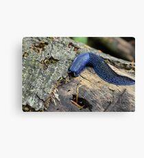 Big blue slug  Canvas Print