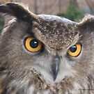 Great horned owl by Jackie Popp