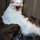 BIG Yawn! by Heather Friedman