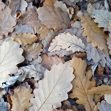 Oak Leaves by synthmax