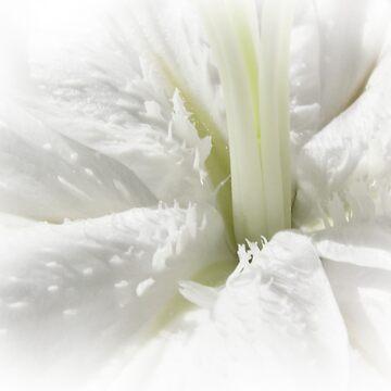 white lily blossom by bepi