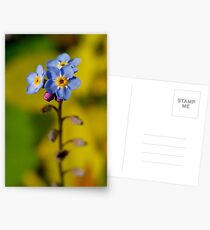 Forget-Me-Not Postcards