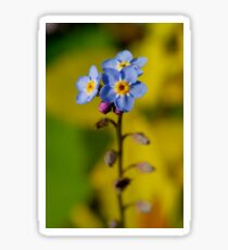 Forget-Me-Not Sticker
