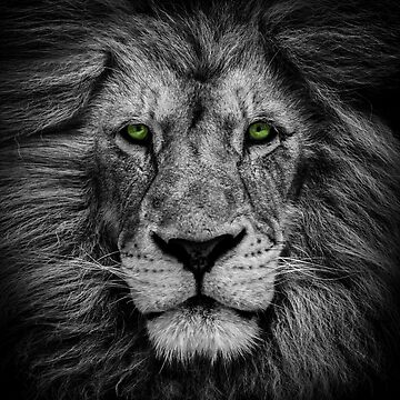 Green Lion B by alanwigg