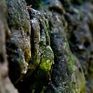 Mossy Rocks by Christina McEwen