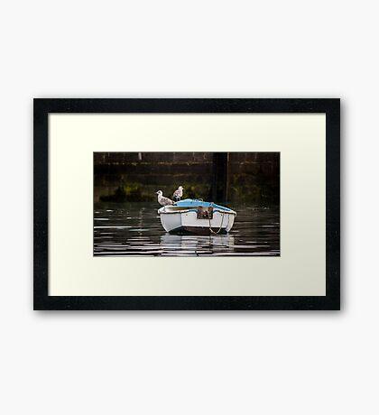 Gullible Cruisers Framed Print