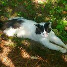 Big Kitty by Vivian Eagleson