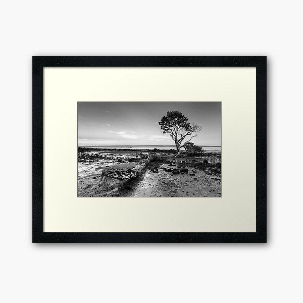 Tenby Point - Mangrove Sunset Black and White Framed Art Print