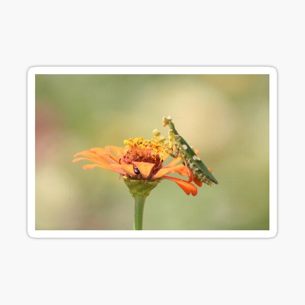 Green Praying Mantis on Flower Sticker