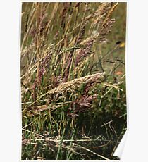 Colored Grass at Lake Cuicocha Poster