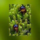 Corybas diemenicus Veined helmet-orchid bag by David  Piko