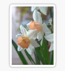 Delicate Daffodils  Sticker