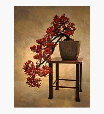 Bonsai Beauty Photographic Print