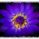 Inner Glow by Keith G. Hawley