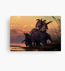 Albertaceratops Pair at Sunset Canvas Print