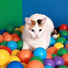 Cat Playing in balls by Dagoth